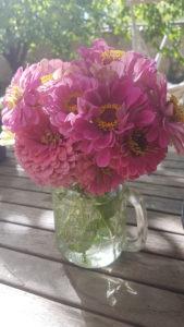 Bouquet de gerbera du jardin